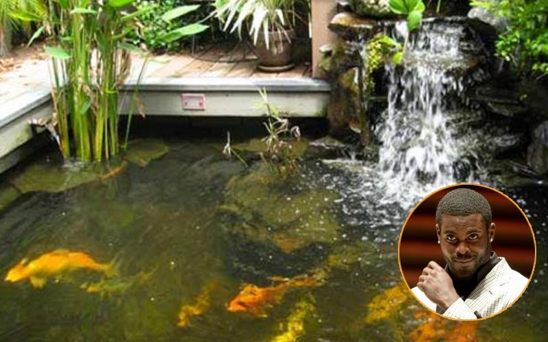 20 useless and ridiculously expensive things celebrities for Michael koi pond