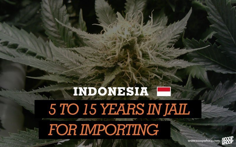 indonesia busted with weed