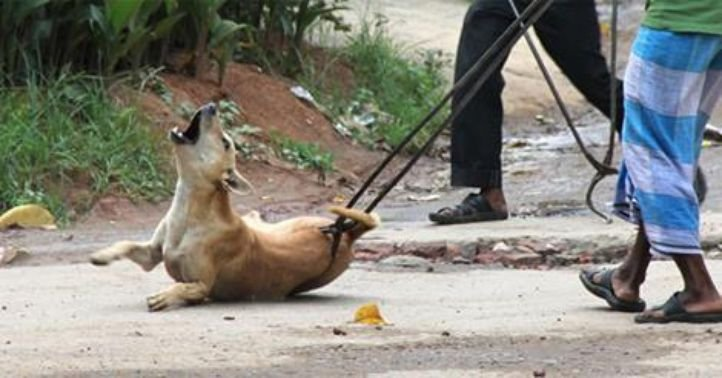 how to train indian country dogs