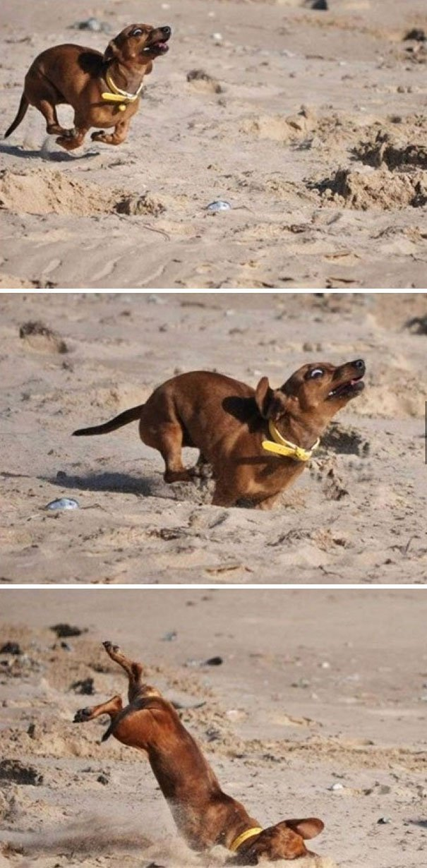 28 Of The Most Adorable Dog Fails That Will Either Make You Laugh Out Loud Or Go Aww