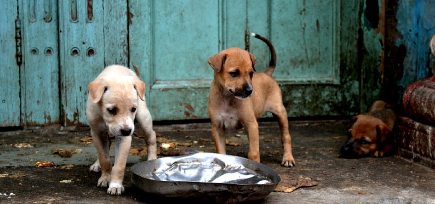 Here S All You Need To Know About Rules Related Pets Street Dogs In India