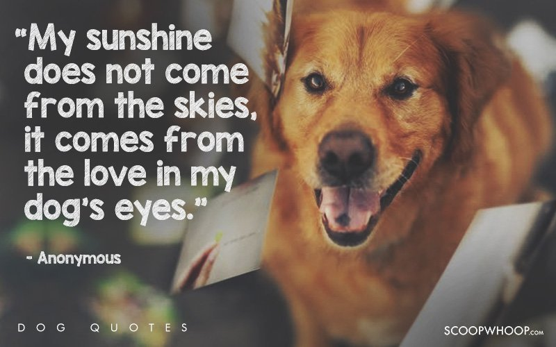 60 Beautiful Quotes That Explain Exactly Why Dogs Are Man's Best Friends Cool Quotes About Dog Friendship