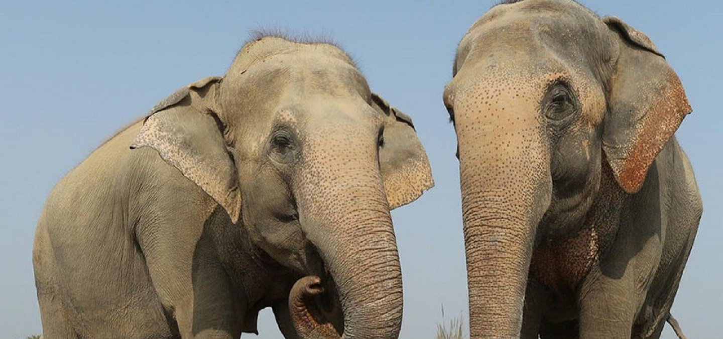 Knitting Jumpers For Elephants Fake : This mathura ngo is knitting sweaters jumpers for