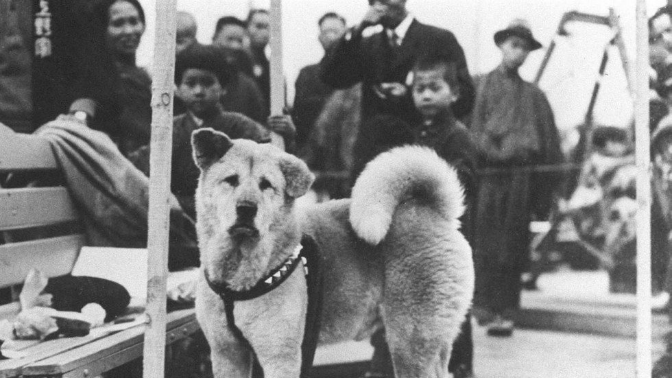 The Incredibly Heartwarming Story Of Hachiko, The Most Loving Loyal Dog Ever