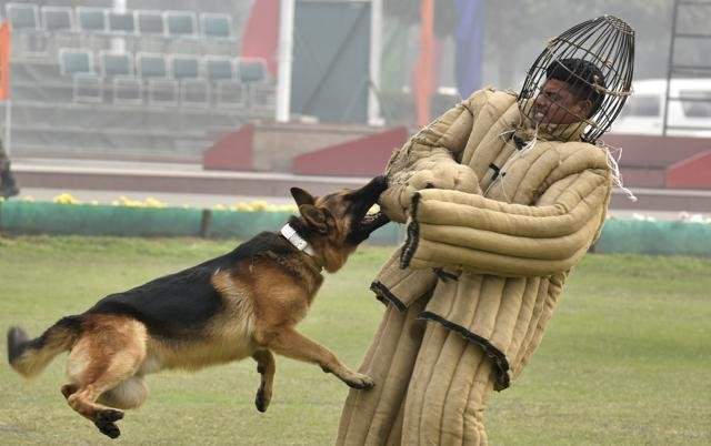 Instead Of German Shepherds The Indian Army Is All Set To Induct