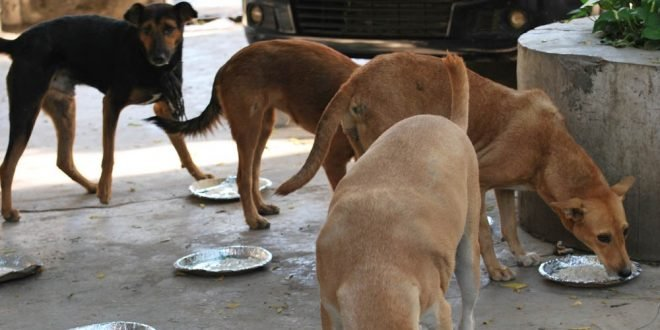 Feeding Stray Animals May Do Them More Harm Than Good If You