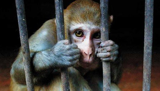 Video Shows A Monkey And Her Baby Being Brutally Manhandled