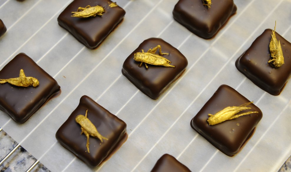 Insect chocolate