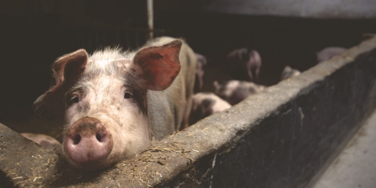 8 Countries With The Strictest Animal Welfare Laws In The World That