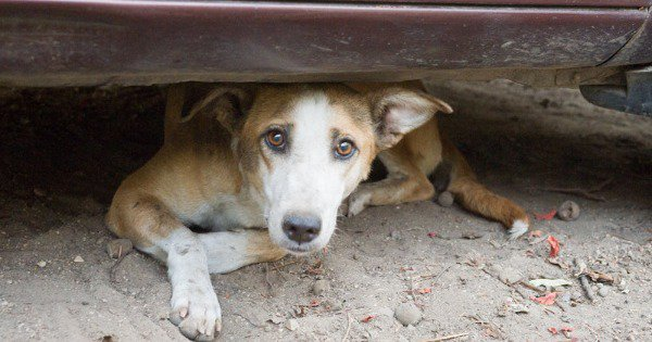 Stray Dogs Go Missing In Ghaziabad. Animal Lovers Searching Frantically, Harassed By Neighbours