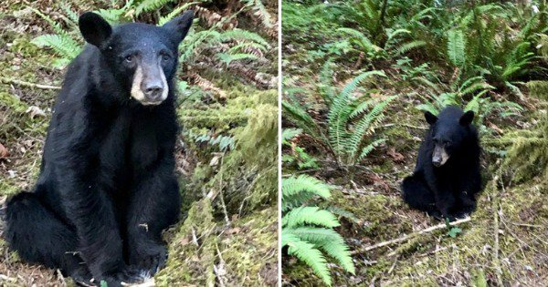 Baby Bear Killed In Oregon Because It Became 'Too Friendly' & Took Selfies With The Tourists