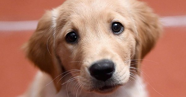Dogs Use 'Puppy Eyes' To Manipulate You And Get Their Way, According To A Study