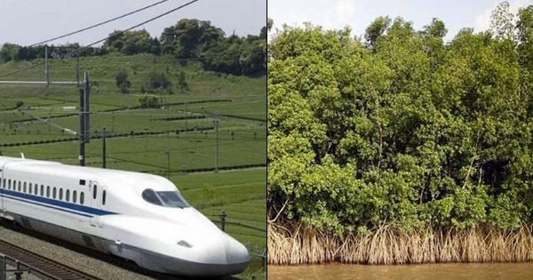 Over 54,000 Mangrove Trees To Be Razed For The Bullet Train Project Between Mumbai & Ahmedabad