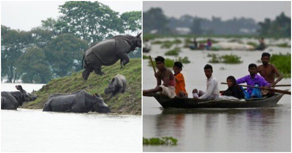 In Pics: Devastating Images Of The Assam Floods That Have Claimed 36 Lives & Displaced Thousands