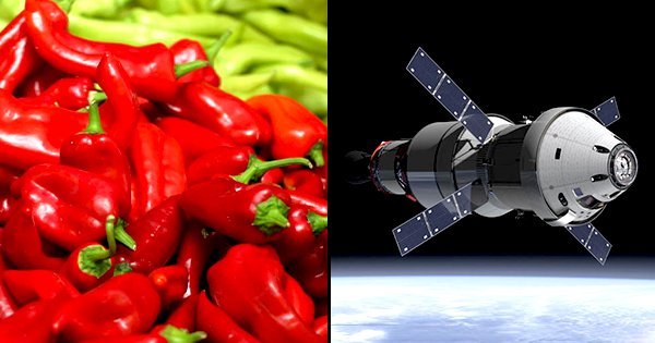 NASA To Grow Chilli Peppers In Space Because Astronauts Said They Want Spicier Food
