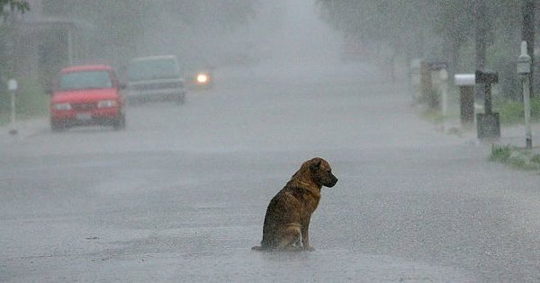 A Dog Was Mercilessly Thrashed for Just Seeking Shelter From The Rains & Was Left In A Coma