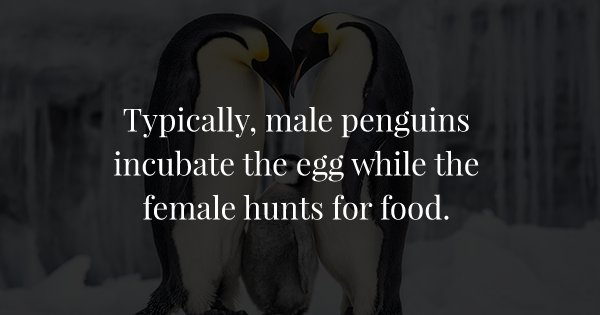 16 Facts About Penguins That Prove That They Are The Most Woke Species Ever