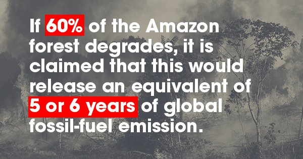 10 Things That'll Happen If The Amazon Rainforest Gets Wiped Out, Maybe Now We'll Give A Sh*t