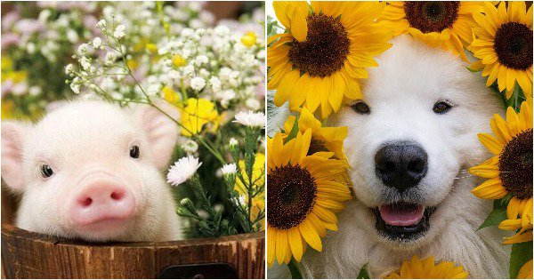 Just Photos Of Baby Animals Surrounded By Flowers To Take You Into 'Phool's Paradise'