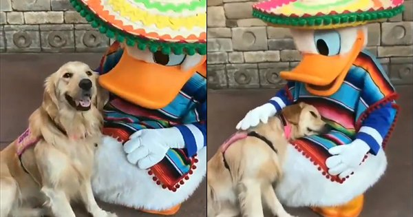 This Video Of Service Doggo Nala Posing With Donald Duck At Disneyland Is Our Cure For Monday