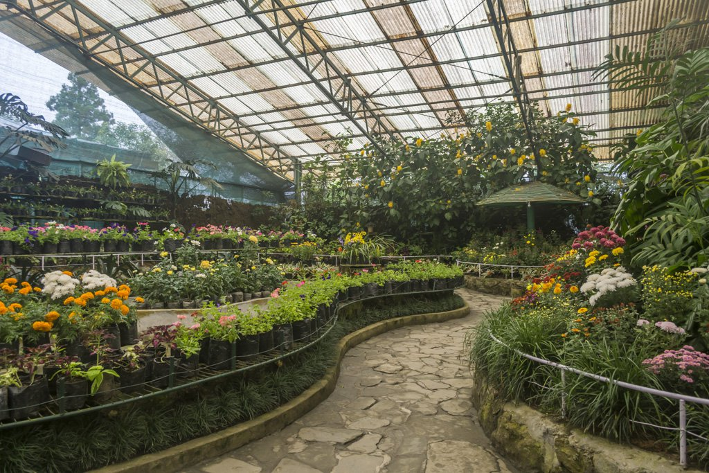 gangtok flower show