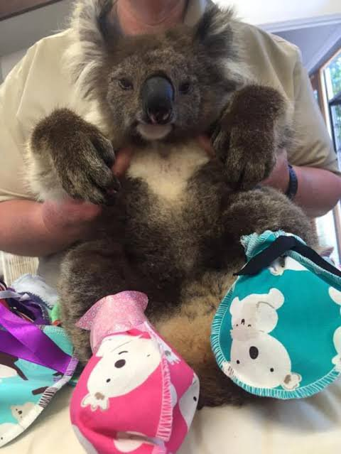 Image result for australian koala mitten