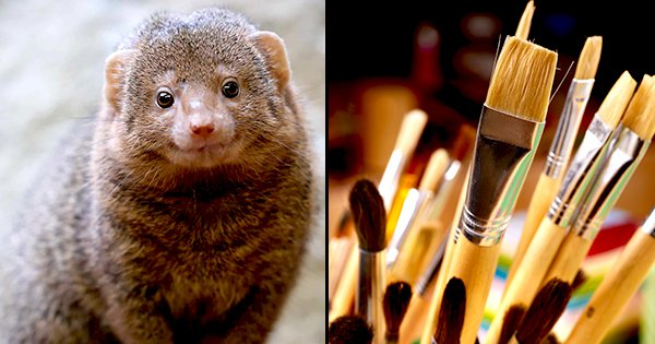 Around 100,000 Mongooses Are Killed To Make Paintbrushes From Their Hair. Cruelty In The Name Art?