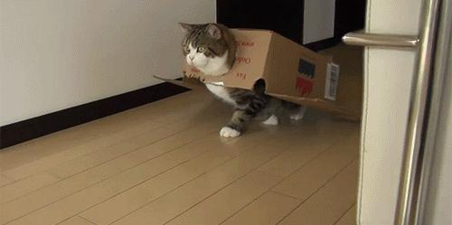 Cat out of the box gif