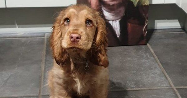 Meet Winnie, The Cocker Spaniel Who Has Won Over The Internet With Her 'Puppy Eyes', Literally
