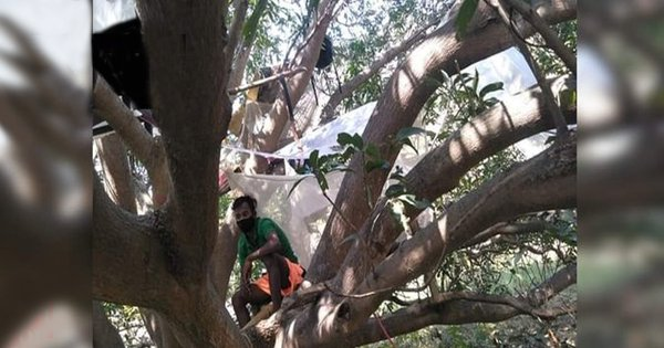 No Space At Home: 7 West Bengal Labourers Returned From Chennai To Quarantine On A Tree