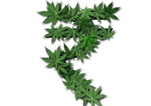 9242013120000214538752weed5real